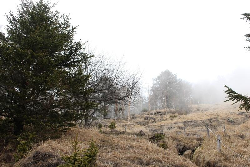 唐松尾根登山道の風景