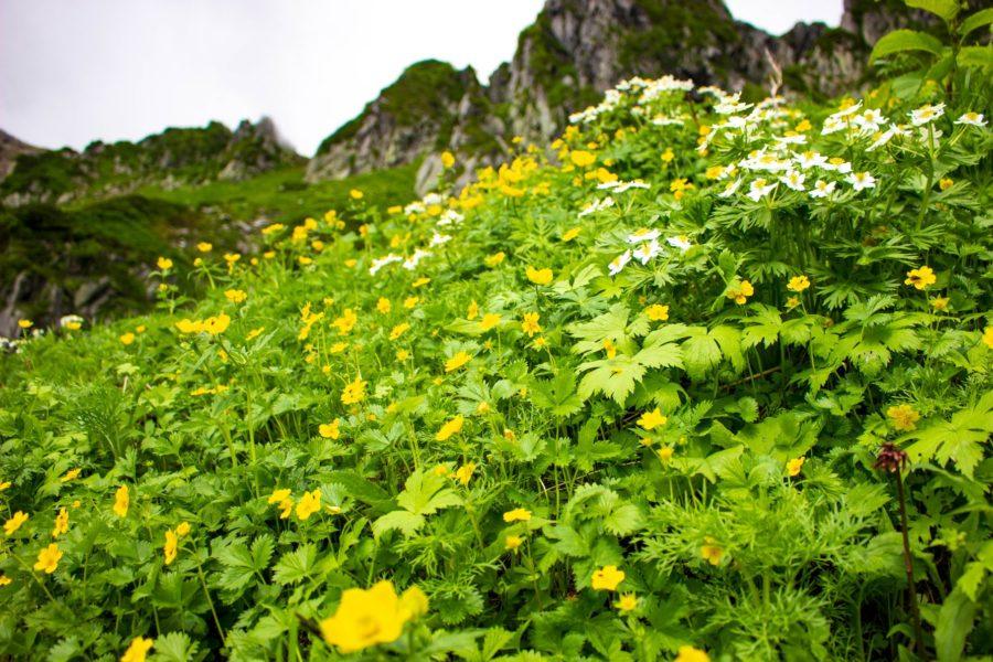 花と山の写真