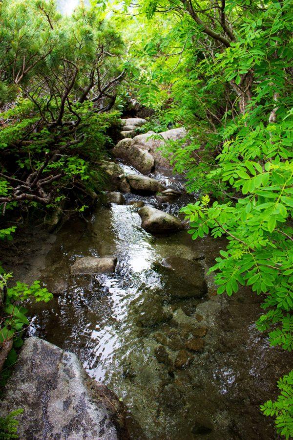 駒飼ノ池へ続く道の様子