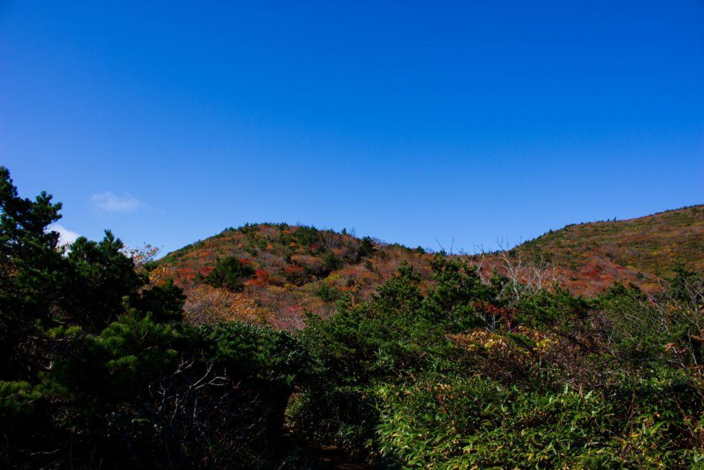山頂方向の景色