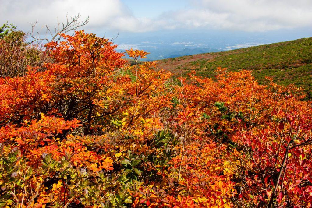 紅葉した登山道脇の木々