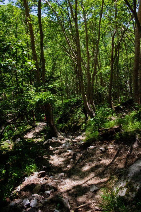 森林を通る下り道