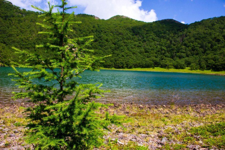水辺に生える木と五色沼