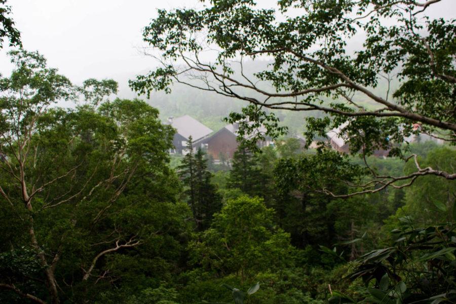 木々の間に見える建物